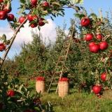 Permakultura – Žít v souladu s přírodou