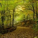 Průvodce po krásách dřeva: listnaté stromy III.