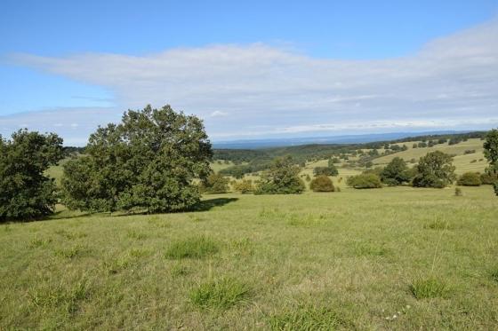 Typický pohled na bělokarpatskou louku se solitérními stromy.