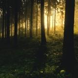 Neopakovatelná metamorfóza borovice