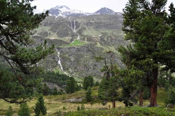 Švýcarský borovicový les Obergurgl byl v roce 1963 prohlášen za národní památku. Na 20 ha se nachází neporušené lesy švýcarských borovic. Nachází se zde také stromy staré více než 300 let.