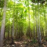 Tropické dřeviny – celkem dostupný luxus II.