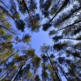 Co si špitají stromy