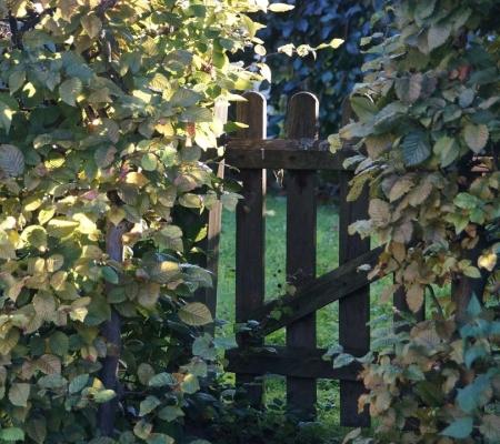 Jaký zvolit plot okolo chalupy?