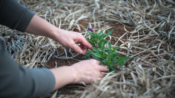 Březen a duben jsou nejvhodnějšími měsíci pro sázení většiny okrasných dřevin, květin i zeleniny