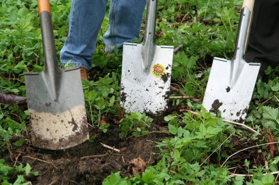Uschlé zbytky i nepěkně vypadající plevelovité rostliny odstraňte
