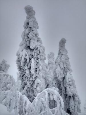 Sněhem zaváté stromy