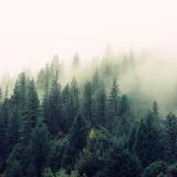 Dřevo v číslech. Kolik je na světě stromů?