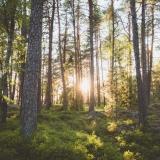 Projděte se srpnovým lesem