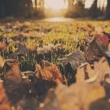 Jak si na podzim udržet zdraví a být fit