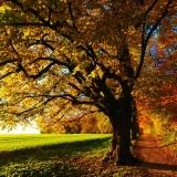 Když se stromy chlubí pestrou paletou