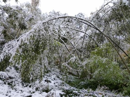 První sníh překvapil stromy hned zkraje podzimu