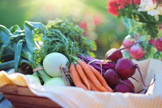 Čerstvé, nezávadné a chutné – taková je zelenina ručně vypěstovaná na vlastní zahrádce.