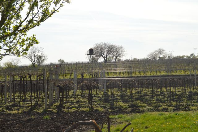 Binderovy vinohrady