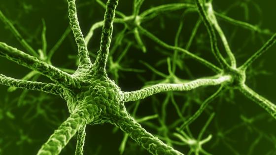 Zjednodušeně lze říci, že  neuronová síť je software, který má schopnost se učit obdobně jako lidský mozek