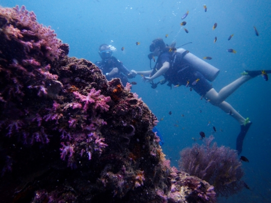 Potápění v Thajsku poblíž ostrova Phi Phi