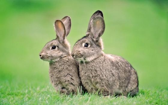 Chytáte rádi více zajíců naráz?