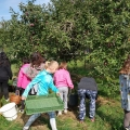 Samosběr ovoce, Domamyslice 2021